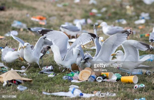 Seagulls fight over food scraps left in front of the Pyramid Stage as festival goers leave the Glastonbury Festival site at Worthy Farm in Pilton on...