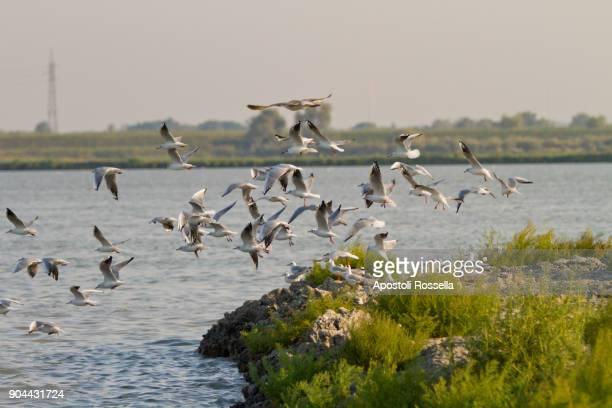 seagulls flight