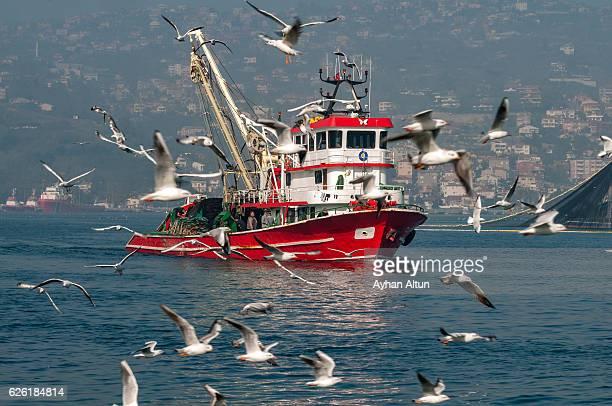 Seagulls flock near a Fishing Boat on the Bosphorus, Istanbul,Turkey