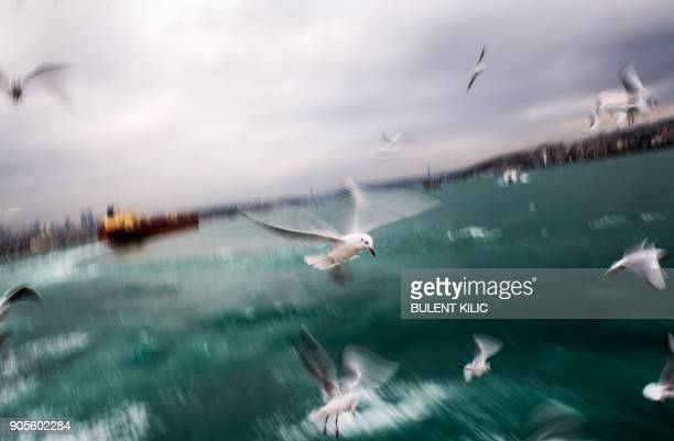 TOPSHOT Seagulls fly above the Bosphorus from the European side to the Asian side of Istanbul on January 16 2018 / AFP PHOTO / BULENT KILIC