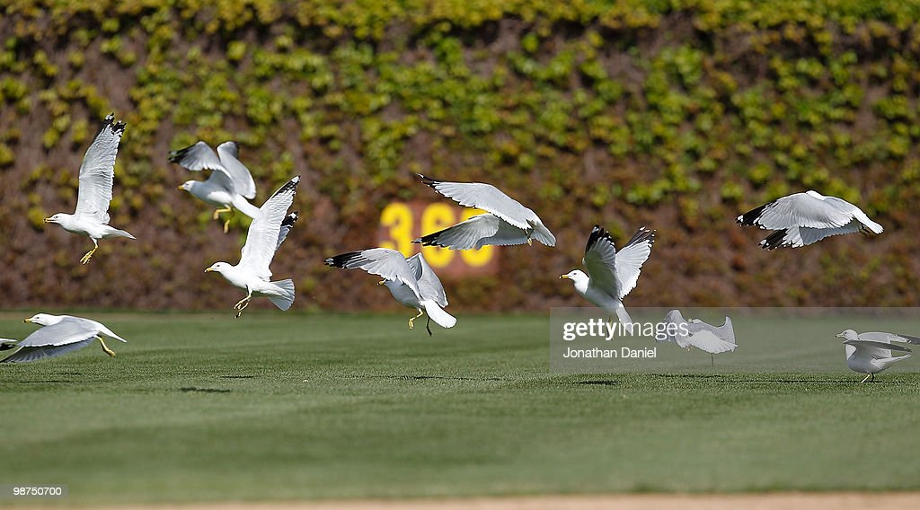 Seagulls fly across the outfield during a game between the Chicago Cubs and the Arizona Diamondbacks at Wrigley Field on April 29, 2010 in Chicago, Illinois. The Diamondbacks defeated the Cubs 13-5.