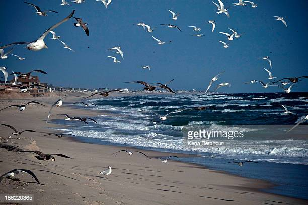Seagulls fly along the beach one year after being partially destroyed by Superstorm Sandy in October 2012 and damaged again in September 2013 by an...