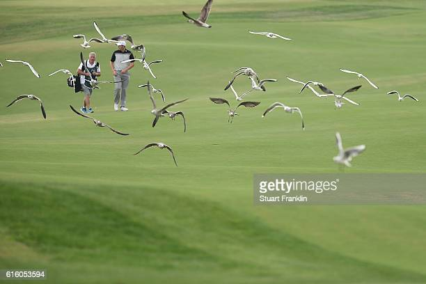 Seagulls fly down a fairway during day two of the Portugal Masters at Victoria Clube de Golfe on October 21 2016 in Vilamoura Portugal