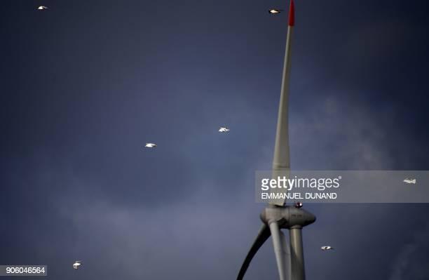 Seagulls fly near wind turbines near the port of Antwerp Belgium on January 17 2018 / AFP PHOTO / EMMANUEL DUNAND