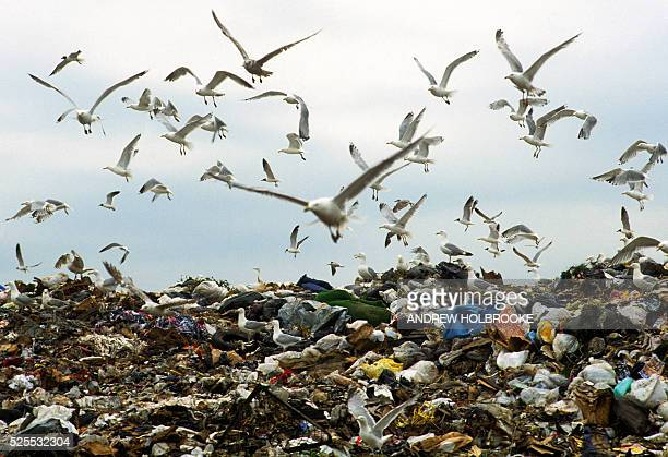 Seagulls fly over Fresh Kills on Staten Island a major landfill for NYC's garbage and the largest dump in the US now closed