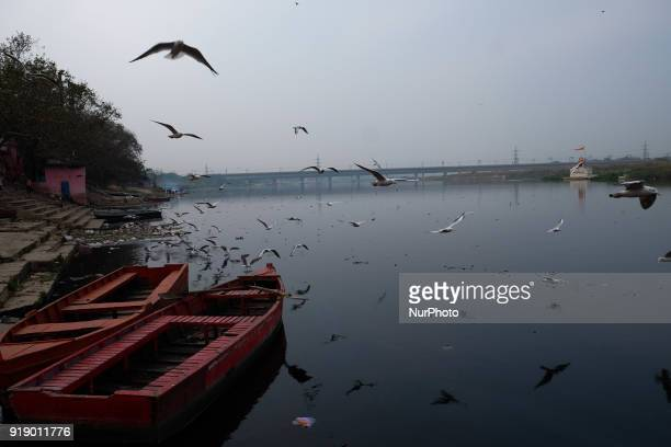 Seagulls fly over the banks of Yamuna river on a chilly evening in New Delhi on 12th February. Concentrations of tiny, airborne PM2.5 particles...