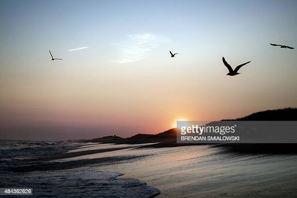 Seagulls fly over the beach during sunset in South Beach State Park August 17 2015 in Edgartown Massachusetts on Martha's Vineyard AFP PHOTO/BRENDAN...