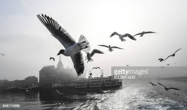 TOPSHOT Seagulls fly over the Bosphorus river while traffic has stopped due to the fog on February 28 2017 in Istanbul / AFP / BULENT KILIC