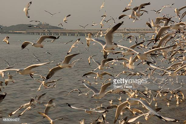 Seagulls fly over the Salween River in Moulmein where it starts to widen before reaching the Gulf of Martaban in the Andaman Sea