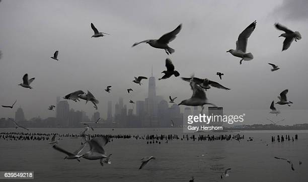 Seagulls fly past lower Manhattan and One World Trade Center in New York City on January 22, 2017 as seen from Hoboken, NJ.