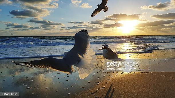 Seagulls Flying Above Beach At Sunset