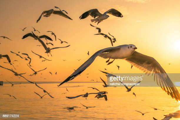 Seagulls Flying Above Sea During Sunset
