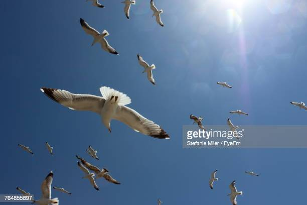 Seagulls Flying Against Sky
