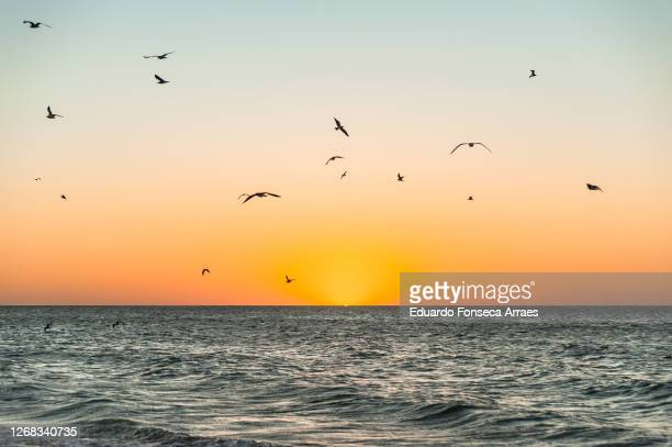 seagulls flying and the sunset over the sea and a deserted beach in celestún - flock of birds stock pictures, royalty-free photos & images