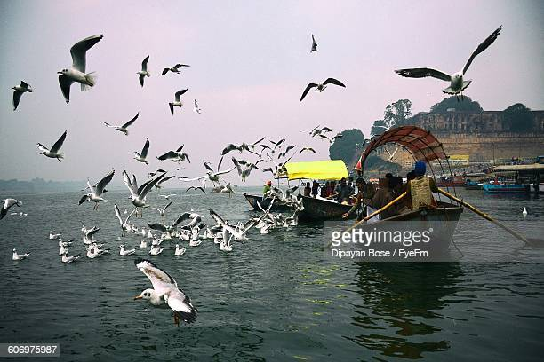 seagulls flying by people traveling on boat in river - river ganges stock pictures, royalty-free photos & images