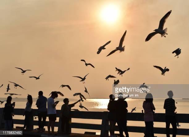 seagulls flying during sunset - um animal stockfoto's en -beelden