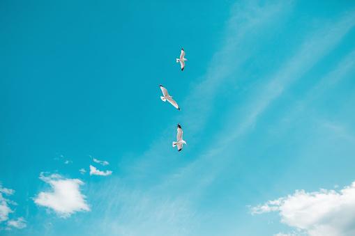 Seagulls flying freely in blue sky - gettyimageskorea