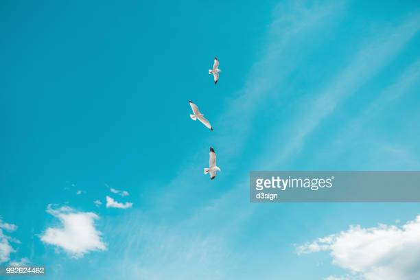 Seagulls flying freely in blue sky