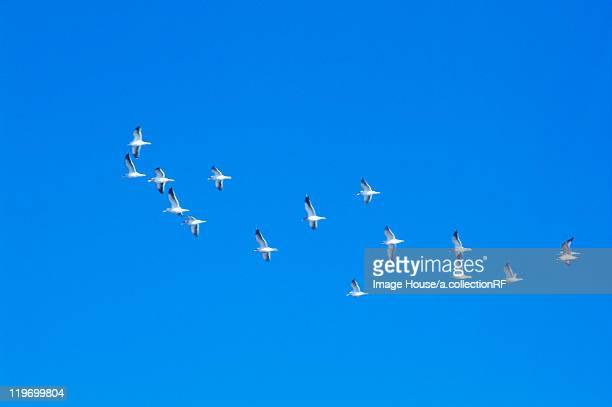 Seagulls flying, Hokkaido Prefecture, Japan