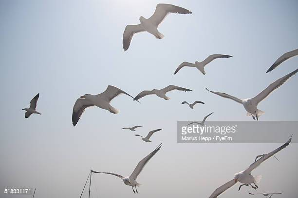 Seagulls Flying In Clear Sky