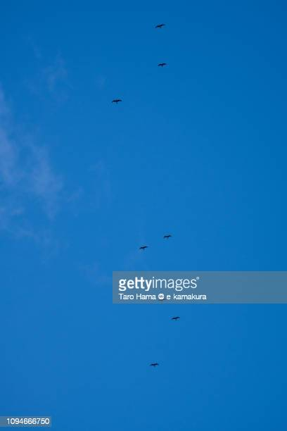 Seagulls flying in the blue sky in Japan