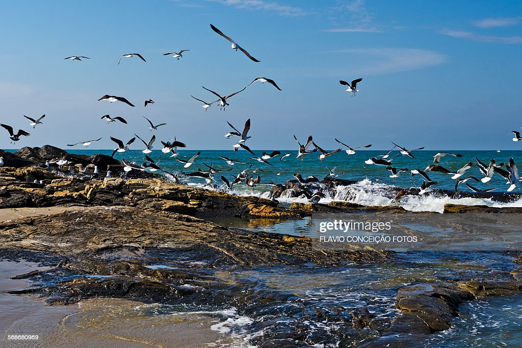 Seagulls flying in the rocks : Stock Photo