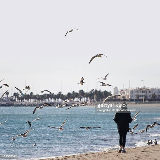 Seagulls flying on beach