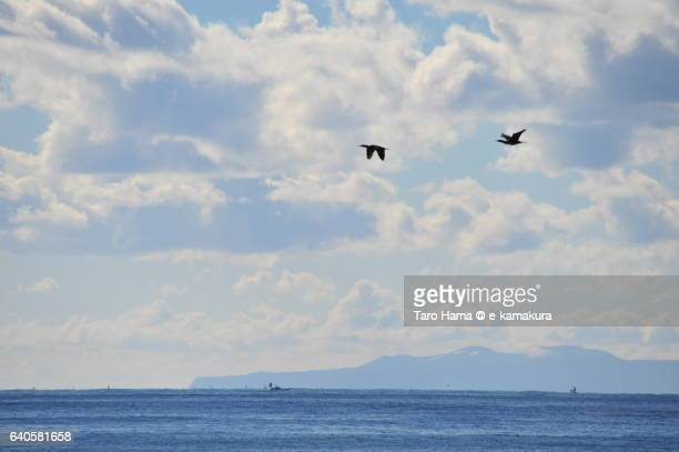 Seagulls flying on sunny beach in winter