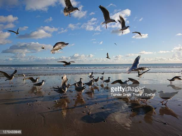 seagulls flying over beach against sky - bournemouth england stock pictures, royalty-free photos & images