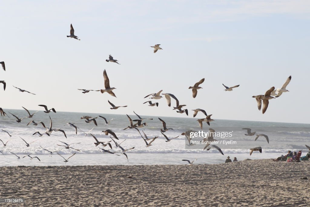 Seagulls Flying Over Beach Against Sky : Photo