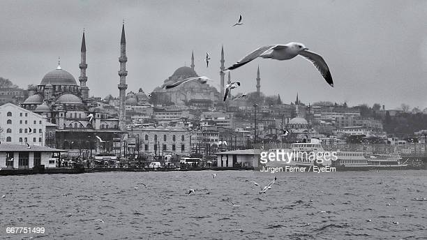 Seagulls Flying Over Bosphorus
