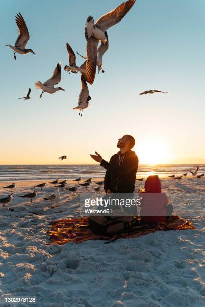 seagulls flying over father and daughter at siesta key beach during sunset - siesta key fotografías e imágenes de stock