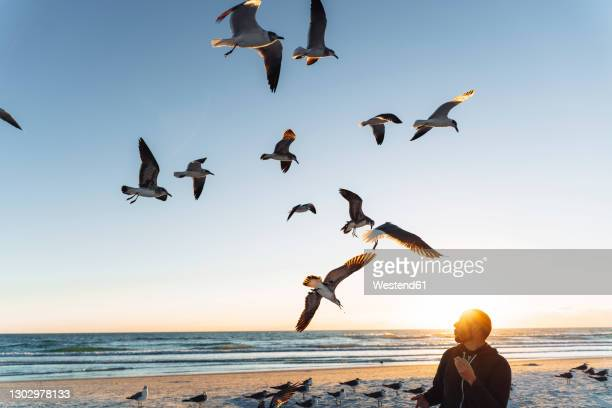 seagulls flying over mid adult man against sky during sunset - siesta key stock pictures, royalty-free photos & images