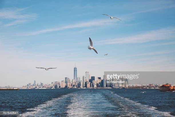 Seagulls Flying Over River Against One World Trade Center