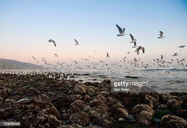 Seagulls flying over rocky beach