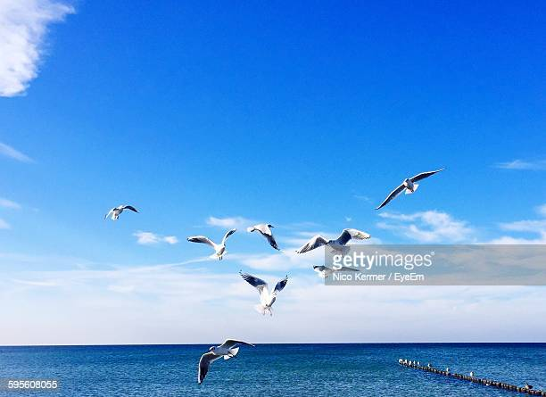 Seagulls Flying Over Sea Against Blue Sky