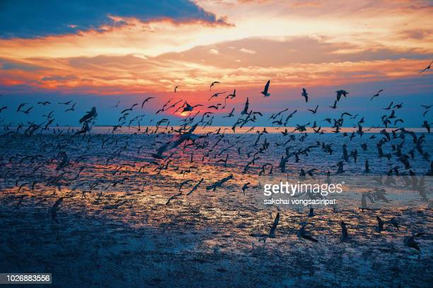 Seagulls Flying Over Sea Against Sky During Sunset, Thailand