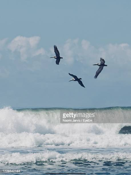 seagulls flying over sea against sky - naomi jarvis stock pictures, royalty-free photos & images