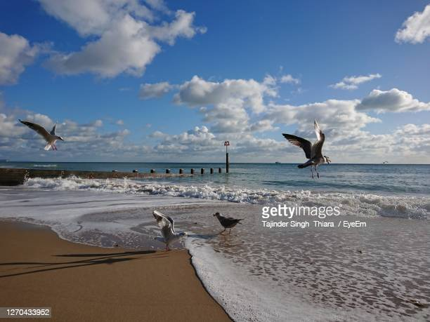 seagulls flying over sea against sky - bournemouth england stock pictures, royalty-free photos & images