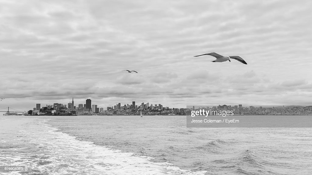 Seagulls Flying Over Sea Against Sky : Stock Photo