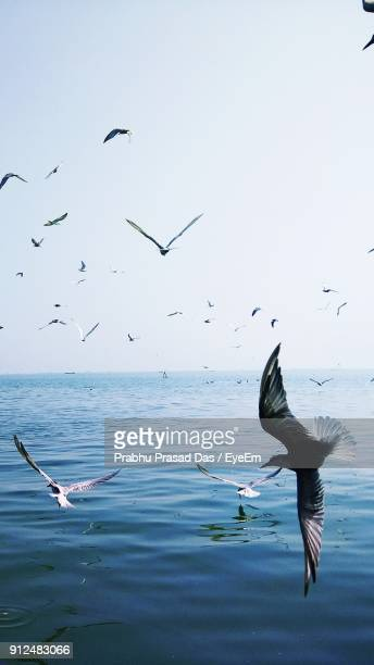 seagulls flying over sea against sky - seagull stock pictures, royalty-free photos & images