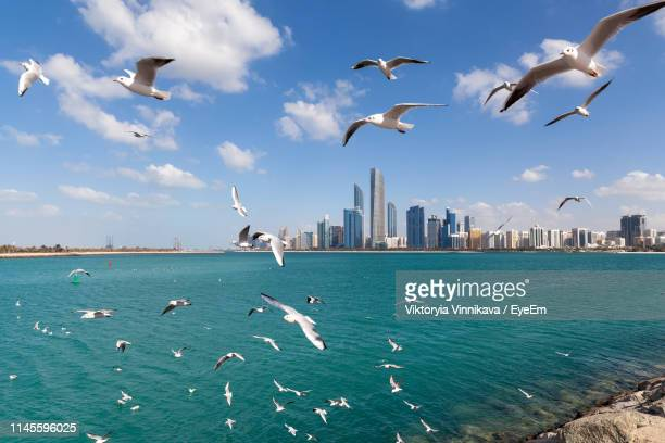 seagulls flying over sea in city - gulf countries stock pictures, royalty-free photos & images