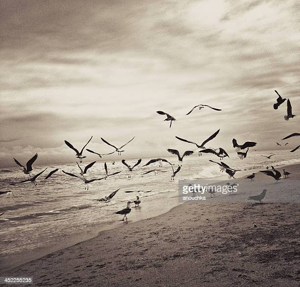 Seagulls flying over the beach