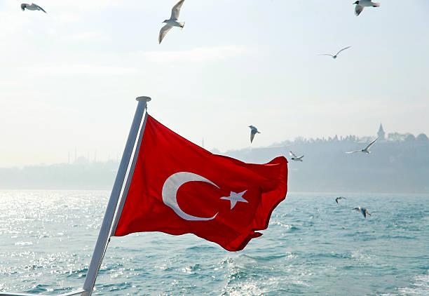Seagulls flying over Turkey flag