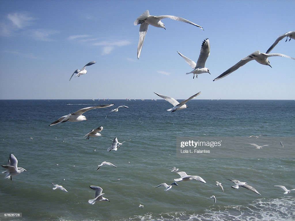 Seagulls flying : Stock-Foto