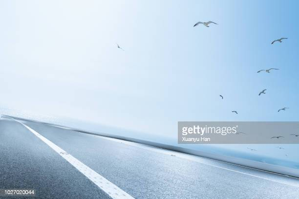 seagulls flying,asphalt road near sea - カモメ科 ストックフォトと画像