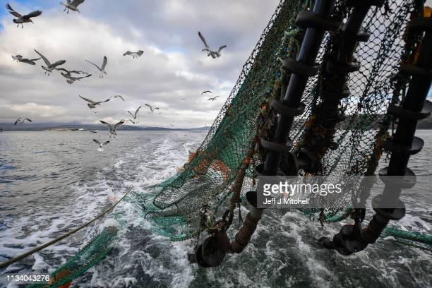 Seagulls follow the Guide Me prawn trawler in Loch Long on March 5 2019 in Greenock Scotland Scotland's live seafood industry is facing the...