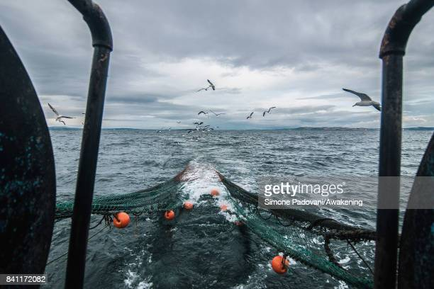 Seagulls follow the trawler to try to catch some fishes while the trawl net is pulled up on August 31, 2017 near Edinburgh, Scotland. Port Seton is...