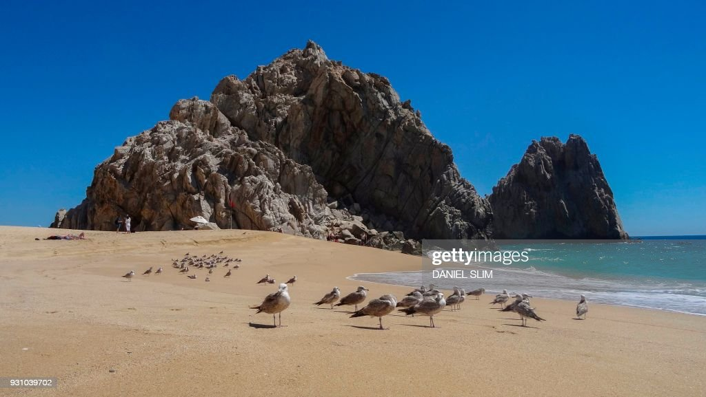 Seagulls Gather On The Love Beach At Los Cabos Baja California Sur State