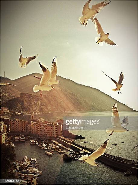 seagulls in flight - luisapuccini stock-fotos und bilder